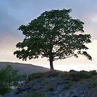 A Tree At Dusk, by Sandra Caven