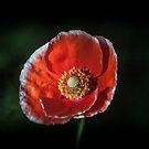 September Blooms by mewalsh