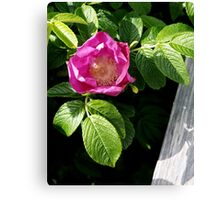 Lone Beach Rose Canvas Print