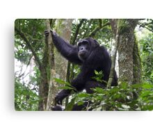 Chimpanzee in Kibali Forest National Park, Uganda Canvas Print