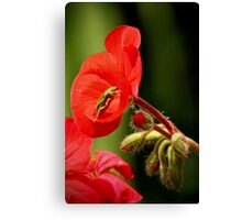 Begonia bug Canvas Print