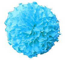 BLUE MARIGOLD Photographic Print