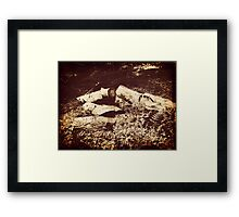 pile of old logs Framed Print