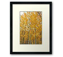 Aspens #1 Framed Print