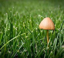 Mushroom by Pam Hogg