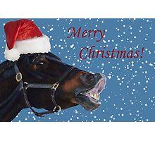 Funny Christmas Pony  Photographic Print