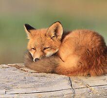 On My Way To Dreamland (Fox Kit) by akaurora