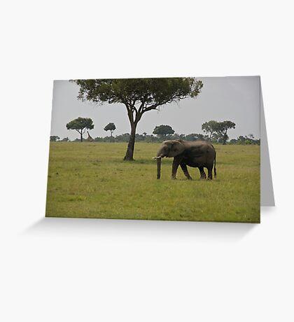 Elephant in Kenya, Africa Greeting Card