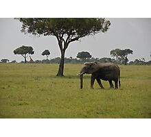 Elephant in Kenya, Africa Photographic Print