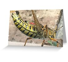 Florida Insect by Keren Greeting Card