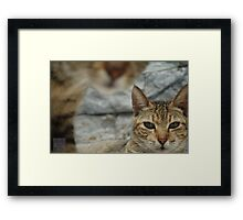 Curiosity is the Cat Framed Print