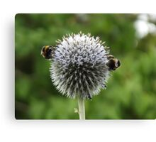 Macro Bumble Bees Canvas Print