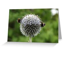 Macro Bumble Bees Greeting Card