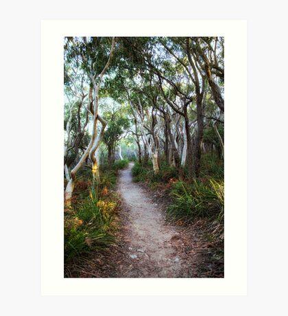 A Walk Through The Trees Art Print