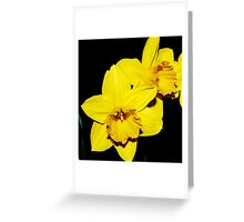 Double Daffodil Greeting Card