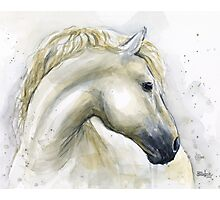 Horse Watercolor Painting Photographic Print