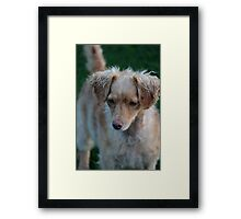 Animals Framed Print