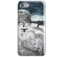 Cormorant nation iPhone Case/Skin