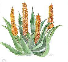Aloe ferox - Nature's ultimate healer by Maree  Clarkson