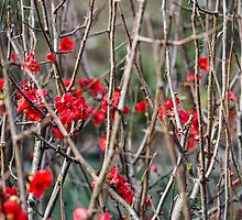 Flowers among Thorns by yolanda