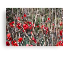 Flowers among Thorns Canvas Print