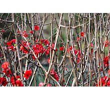 Flowers among Thorns Photographic Print