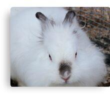 cute white rabbit Canvas Print