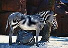 Is It Black with White Stripes or White with Black Stirpes? by barnsis