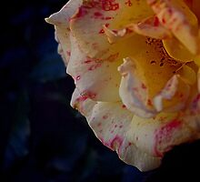 Blemished Beauty by Penny Kittel
