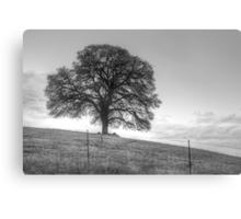 Oak Tree On A Hill Canvas Print