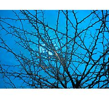 Against the blue sky  Photographic Print