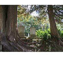 Cosy Between Two Trees Photographic Print