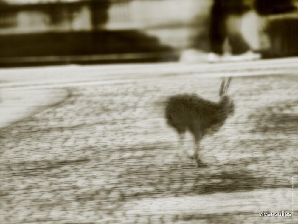 City Hare seeking Refuge VRS2 by vivendulies