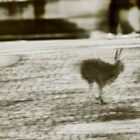 City Hare seeking Refuge by vivendulies