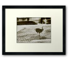 City Hare seeking Refuge Framed Print