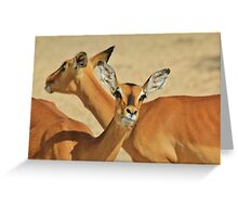 Impala - Funny Nature - African Wildlife Background Greeting Card