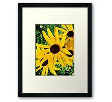 Black Eyed Susan Wildflowers Framed Print