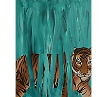 turquoise tiger Photographic Print