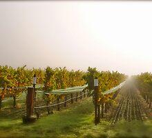 Vineyard Mist by emilypaigeh835
