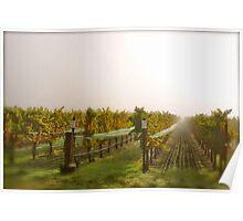 Vineyard Mist Poster