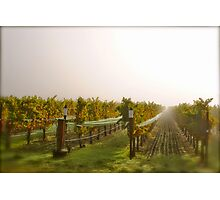 Vineyard Mist Photographic Print