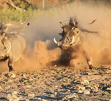 Warthog - Dust, Tusks and Hormones by LivingWild