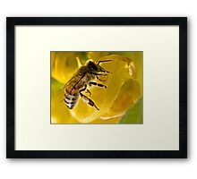 Black On Yellow Framed Print