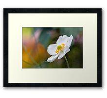 White Anemone Framed Print