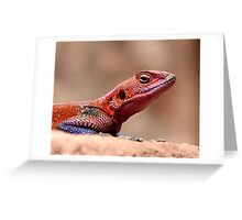 East African Rainbow Agama Lizard, Male Greeting Card