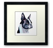 Boston Terrier - USA Framed Print