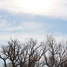 Trees and Sky by debsdesigns