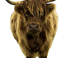 Shaggy Highland Cow IV by Alius Imago