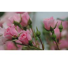 Pink Bouquet of Roses Photographic Print