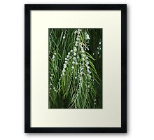 Ernestos' Garden; Weeping Willow in Bloom; La Mirada, CA USA Framed Print